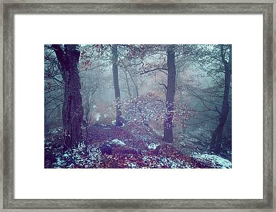 In The Heart Of Blue Woods Framed Print