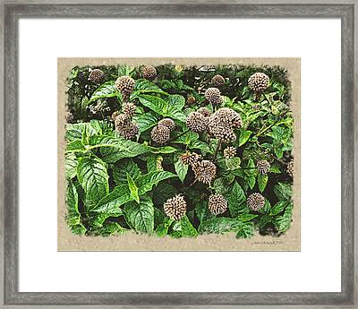 Framed Print featuring the photograph In The Highline Garden by Joan  Minchak