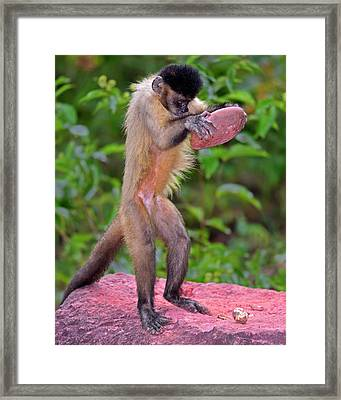 In The Kitchen Framed Print by Tony Beck
