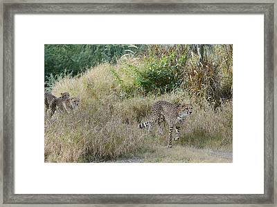 In The Lead Framed Print by Fraida Gutovich