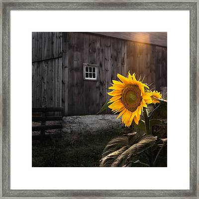 In The Light Framed Print by Bill Wakeley