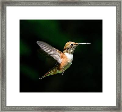 In The Light Framed Print by Sheldon Bilsker