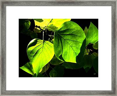 In The Limelight Framed Print by Will Borden