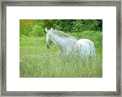 In The Meadow Framed Print by JAMART Photography