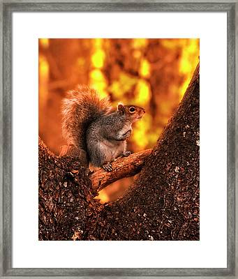 In The Middle Framed Print
