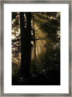 In The Mist Of Dreams Framed Print by Jeff Swan