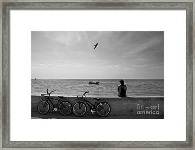 In The Moment Framed Print by Ray Medina