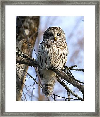 In The Morning Light Framed Print by Heather King