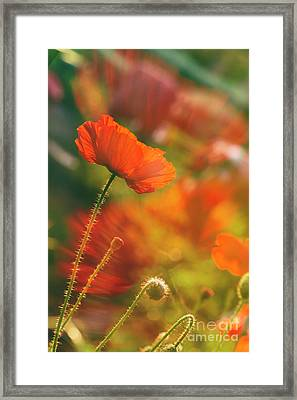 In The Morning Light Framed Print by Veikko Suikkanen