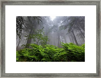 In The Murky Wood Framed Print by Evgeni Dinev