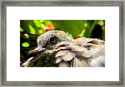 In The Nest Framed Print by Catherine Natalia  Roche