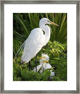 In The Nest Framed Print