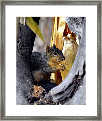 In The Niche Framed Print