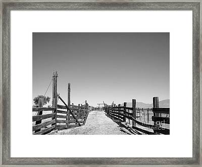 In The Paddock Framed Print by Lisa Schafer