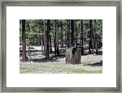 In The Pines Framed Print
