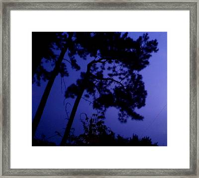 In The Pines Framed Print by Leslie Revels