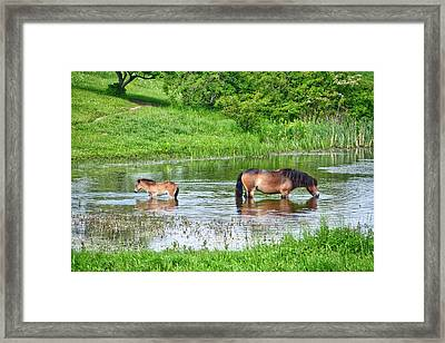 In The Puddle 1 Framed Print
