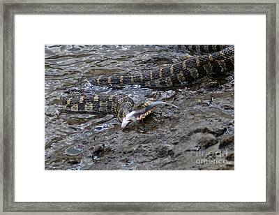 In The Rock River Framed Print by Laura Birr Brown