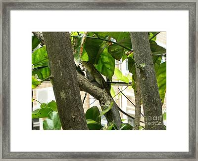 In The Shade Framed Print by Kathy Daxon