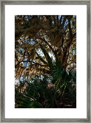 In The Shade Of A Florida Oak Framed Print by Christopher Holmes