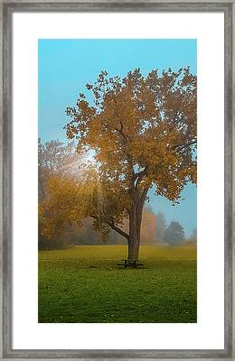In The Shade Of Autumn Tree Framed Print by Art Spectrum