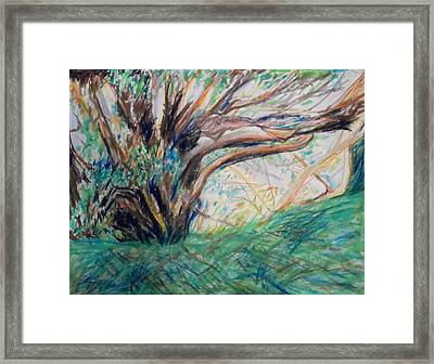 In The Shade Of The Sycamore Tree Near Ashdod Framed Print by Esther Newman-Cohen