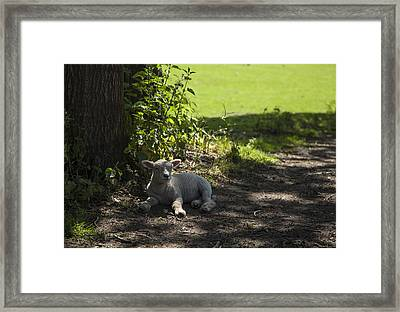 Framed Print featuring the photograph In The Shade by Stewart Scott