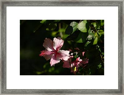 In The Shade Framed Print by Zina Stromberg