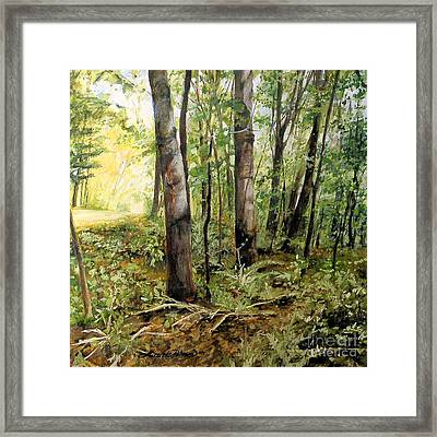In The Shaded Forest  Framed Print