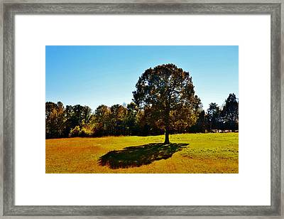 In The Shadow Of A Tree Framed Print