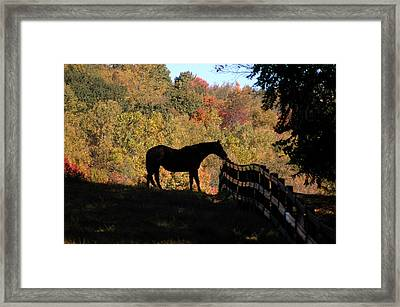 In The Shadow Framed Print by William A Lopez