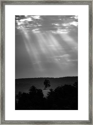 Framed Print featuring the photograph In The Spotlight by Bill Wakeley