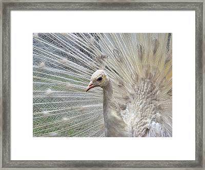 Framed Print featuring the photograph In The Spotlight by Blair Wainman