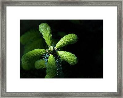 In The Spotlight Framed Print by Mark Denham