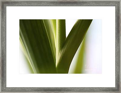 In The Spotlight Of Support Framed Print by Amanda Barcon