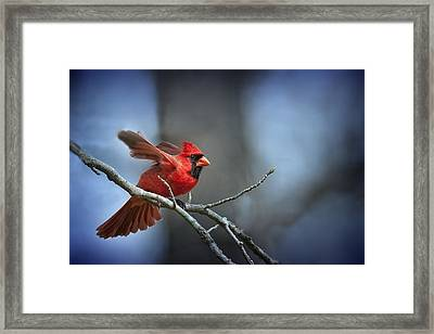 In The Still Of The Night . . . Framed Print by Bonnie Barry