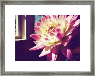 In The Sunshine Framed Print by JAMART Photography