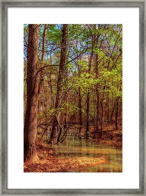 In The Swamp Framed Print by Barry Jones