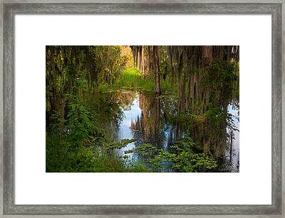 In The Swamp Framed Print by Carolyn Dalessandro