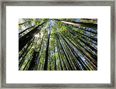 In The Swamp Framed Print