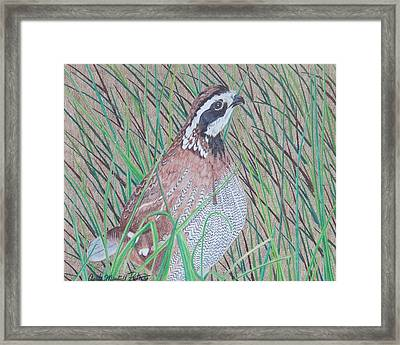 In The Tall Grass Framed Print
