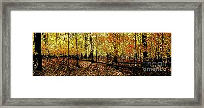 In The The Woods, Fall  Framed Print