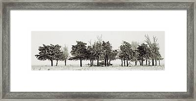 In The Tree Line Framed Print by Don Durfee