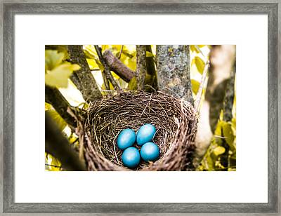 In The Trees Framed Print by Shelby  Young