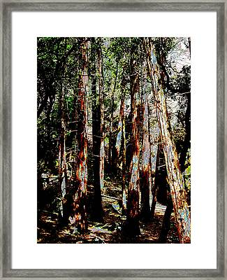 In The Trees Framed Print by Tim Tanis