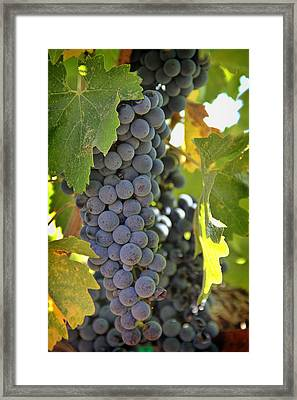 In The Vineyard Framed Print by Nancy Ingersoll