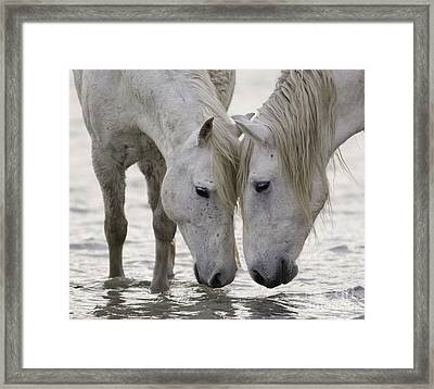 In The Water At Dawn Framed Print by Carol Walker