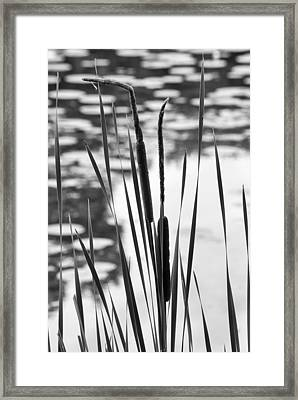 In The Weeds Framed Print by Christi Kraft