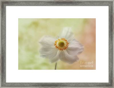 In The Whisper Of A Gentle Breeze  Framed Print by John Edwards