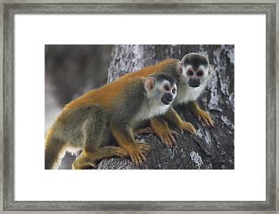 In The Wild Framed Print